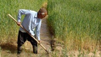کشاورزی که بیماری درو میکند