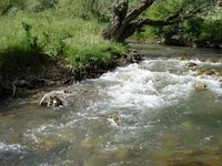 رودخانه تجن ساری سیلابی شد