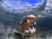 مرگ تمساح با چکش +فیلم