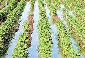 نشست نهایی کردن سند علم و فناوری کشاورزی برگزار میشود