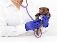 خبر جراحی زیبایی حیوانات دروغ است