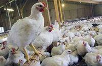 واکنش وزارت بهداشت به خبر شیوع آنفلوآنزای پرندگان