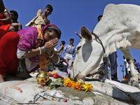 مجازات حبس ابد برای کشتن گاو