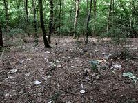 خطری دوباره برای جنگلهای شمال