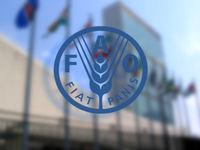 وعده چین برای تأمین منابع مالی فائو