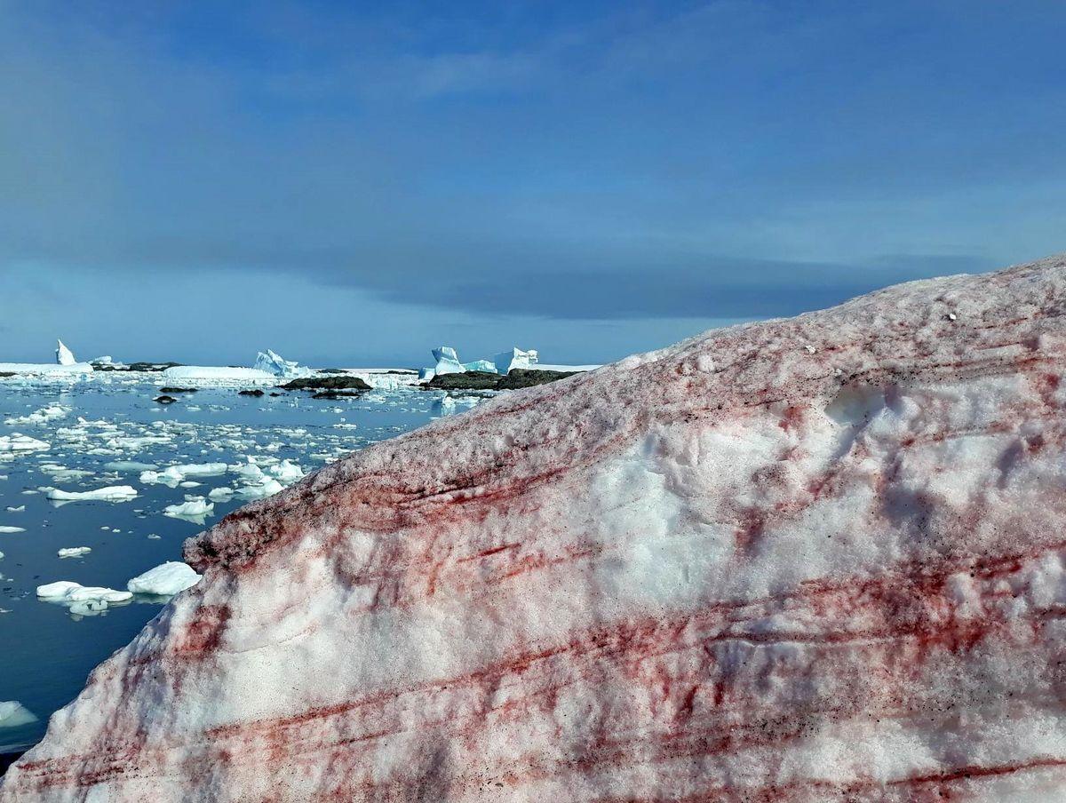 برفهای قطبی به رنگ سرخ! +عکس