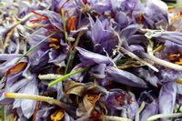 صادرات چمدانی زعفران از کشور