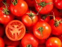 قیمت گوجه فرنگی در میادین میوه و تره بار؛ 8500تومان