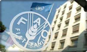 فائو: تعداد کشورهای نیازمند به کمکهای غذایی افزایش یافت