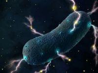 باکتری الکتریکی در روده انسان کشف شد