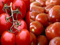 روسیه به ممنوعیت واردات گوجه فرنگی ترکیه پایان داد