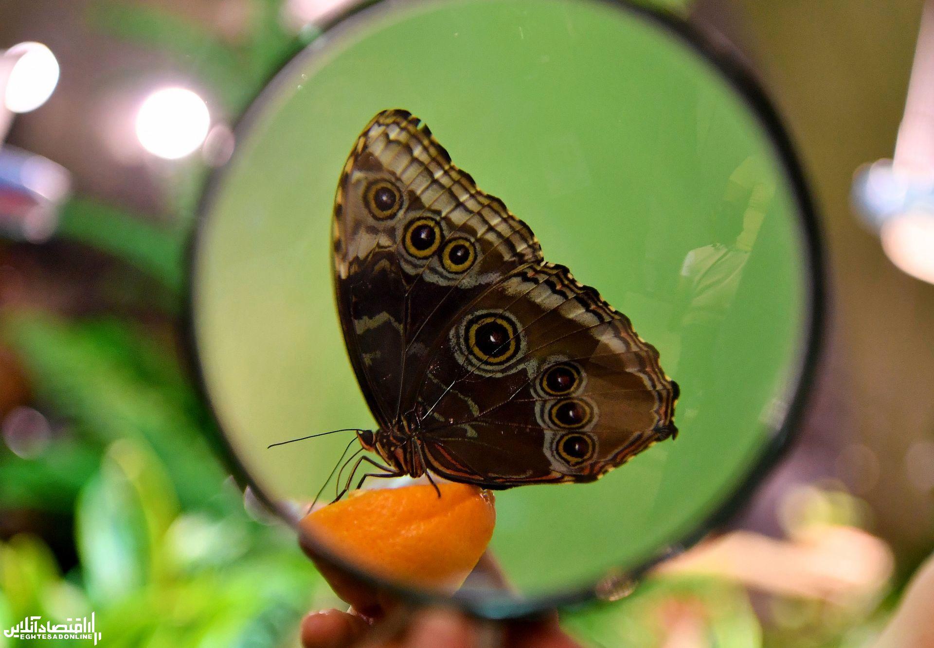 نمایشگاه پروانههای زنده