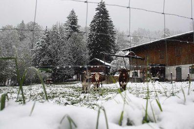 بهار زمستانی در اروپا