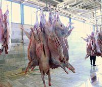 عرضه روزانه 120تن گوشت دام زنده وارداتی به بازار/ ارجاع تخلف شرکتهای واردکننده گوشت قرمز به مراجع قضایی