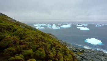 تغییرات آبوهوایی، عاملی برای رشد بیشتر گیاهان قطبی