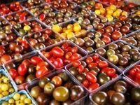 گوجه فرنگی صد درصد ارزان شد/ بازار میوه شب یلدا قابل پیشبینی نیست