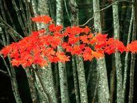 زیباییهای فصل پاییز از نگاه نشنال جئوگرافیک +تصاویر