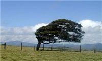 وزش باد شدید در برخی مناطق کشور