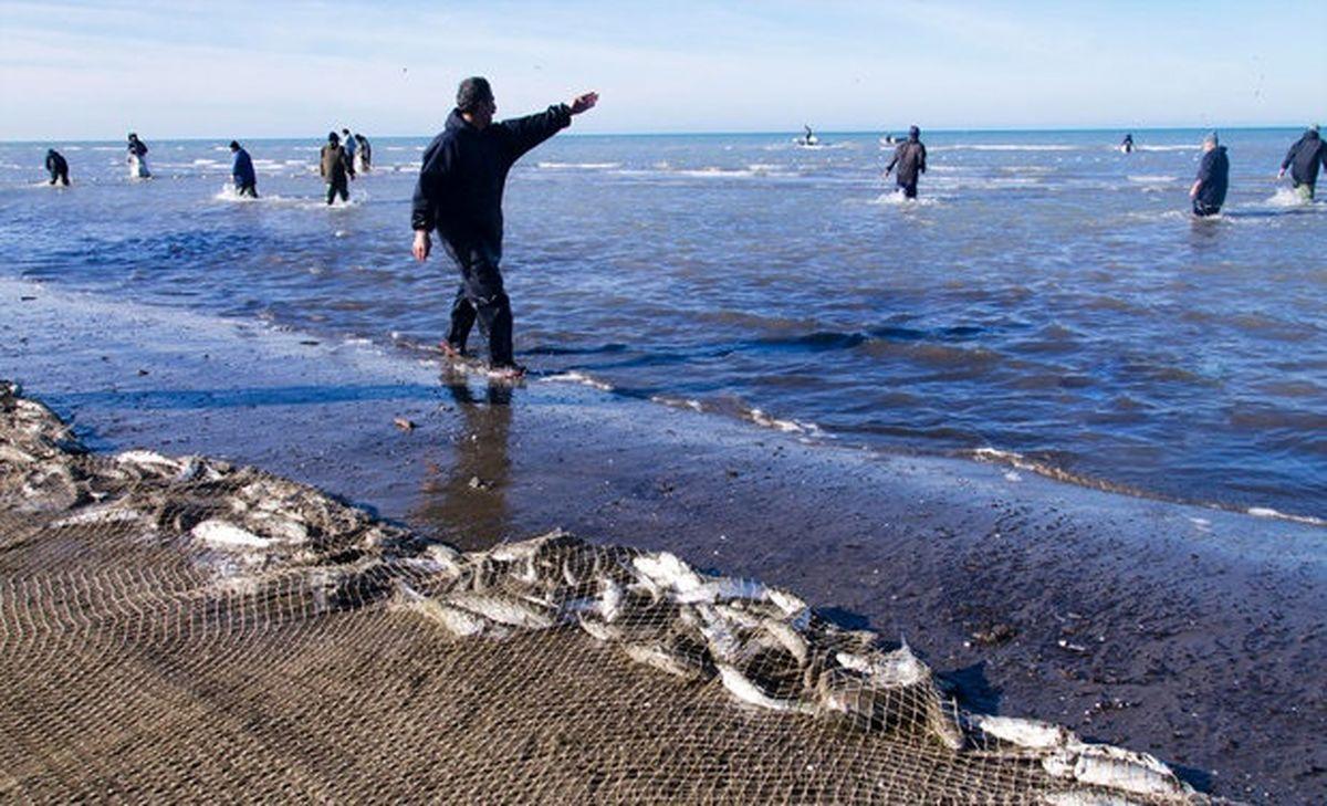 صید ماهی خزری در یکسال ۵۰درصد کم شد