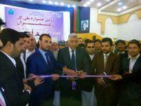 ۶ تن زعفران امسال در هرات برداشت شد