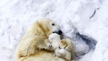 زندگی خصوصی یک مادر و فرزند در قطب! +عکس