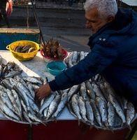 چوبزنی ماهیان خزر در شنبهبازار انزلی +تصاویر