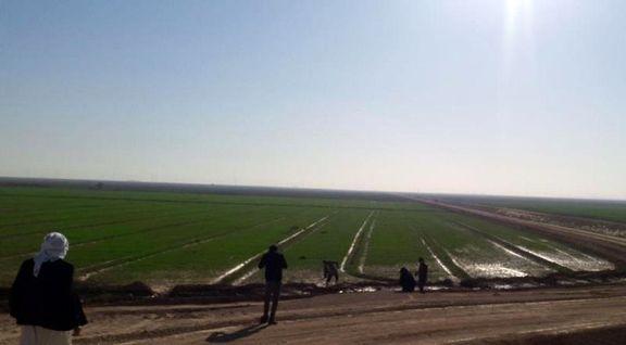 فائو از طرح۵۵۰هزار هکتاری خوزستان دیدن کرد