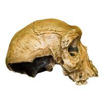 جزییاتی از جمجمه کشف شده در همدان