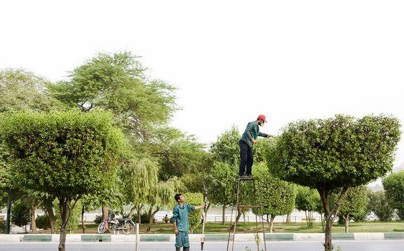 ادامه اختلاف نظرها بر سر هرس درختان تهران/ مختاری: زمان هرس همین الان است