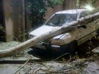 سقوط درخت بر روی خودرو بر اثر طوفان در گرگان +عکس