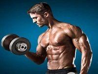 پروتیئنهای اصلی عضلهسازی کشف شد
