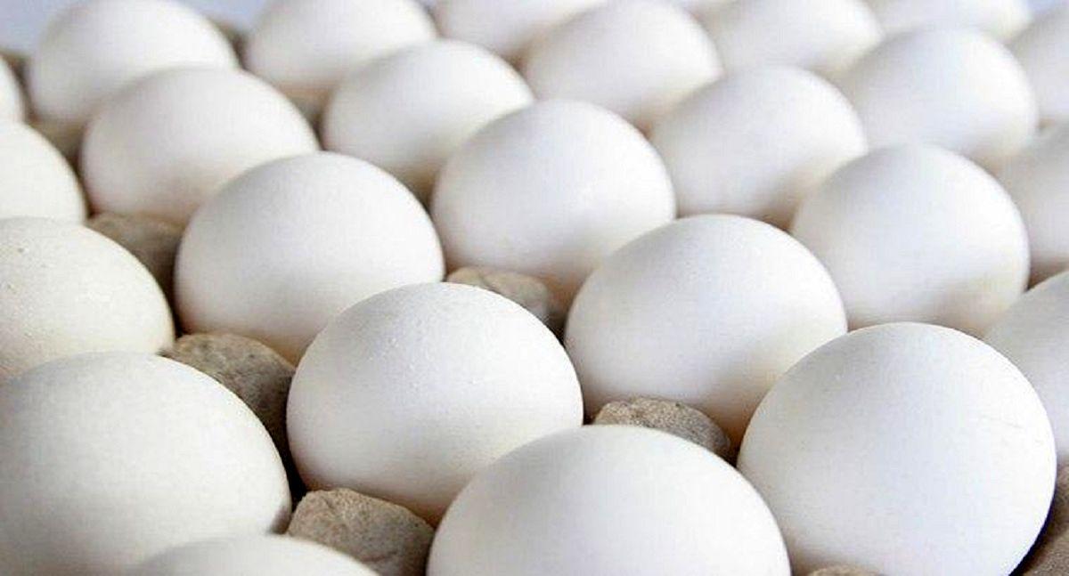 تعیین قیمت مجزا برای تخم مرغ بستهبندی