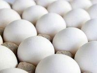 چرا تخم مرغ ارزان نمیشود؟