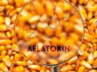 روشی مولکولی برای تشخیص آفلاتوکسین در مواد غذایی