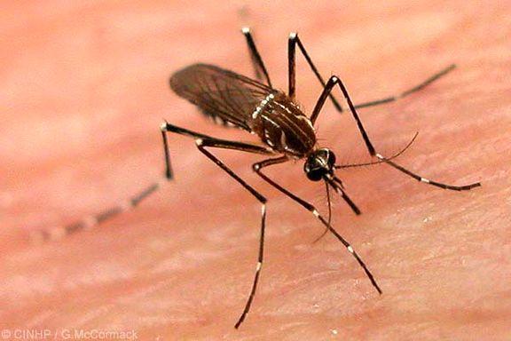 چگونه از نیش پشهها در طول شب در امان بمانیم؟