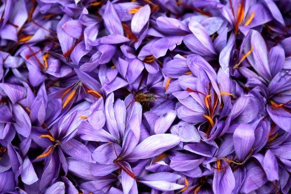 تحریمها بازار صادرات زعفران ایران را رونق داد