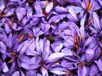اثر تشدید تحریمها بر بازار جهانی زعفران ایرانی چه بود؟