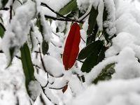 بارش بیسابقه برف در ارتفاعات شمال تهران +فیلم