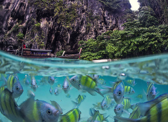 تصاویری بکر از دو دنیای روی و زیر آب!