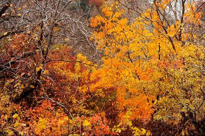 پاییز در روستای واریان