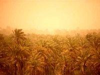 تقویت پوشش گیاهی کانونهای ریزگرد چندین سال زمان میبرد