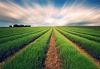 کاهش ۴۰ درصدی هزینه تولیدات کشاورزی با روش تراریخته