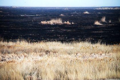 تالاب میقان پس از آتشسوزی +تصاویر