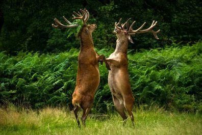 تصاویر از دنیای حیوانات