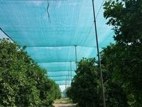 یک میلیون هکتار باغات کشور زیر سایبان میروند