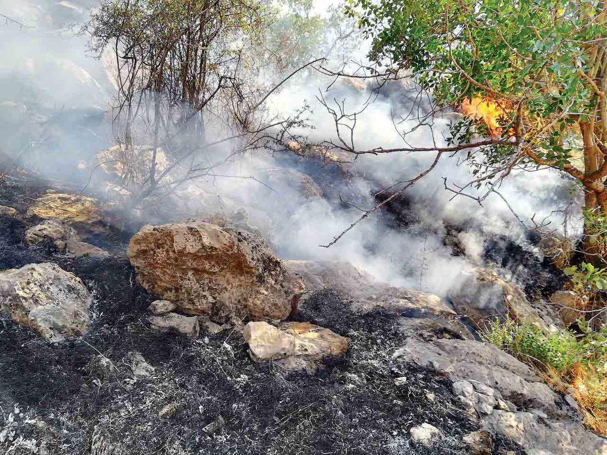 نوشدارو برای جنگلهای سوخته گچساران