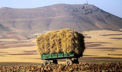واردات شکر به کشور متوقف شد