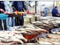 کاهش قدرت خرید و افت مصرف ماهی خانوارها