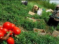 رشد تعداد بیکاران طی سال۹۶ تقریباً به صفر رسید/ افزایش میزان اشتغال در بخش کشاورزی