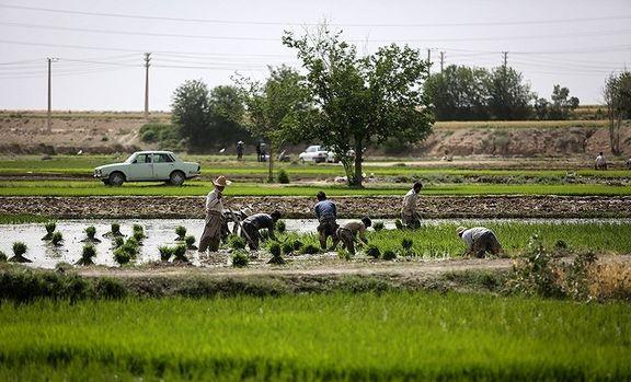 """خودکشی دستهجمعی کشاورزی در """"رستم""""!"""